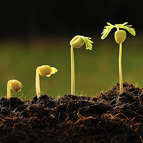 Lessons for Nonprofits Seeking to Grow a Promising Program